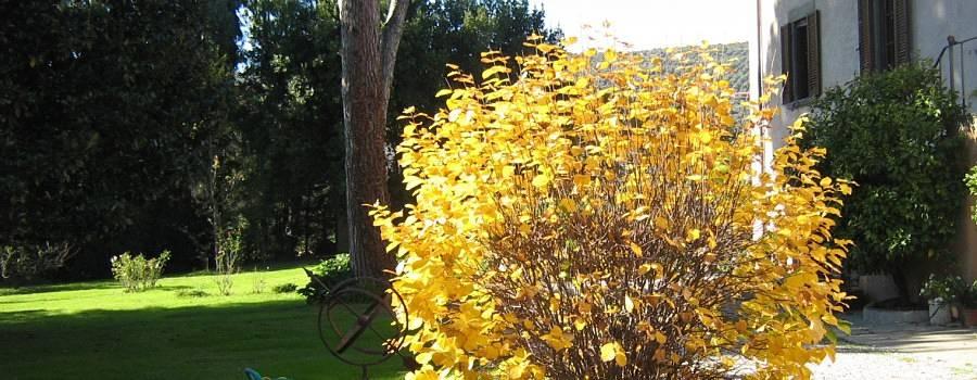 Gardening_season_autumn_pompadur_opt