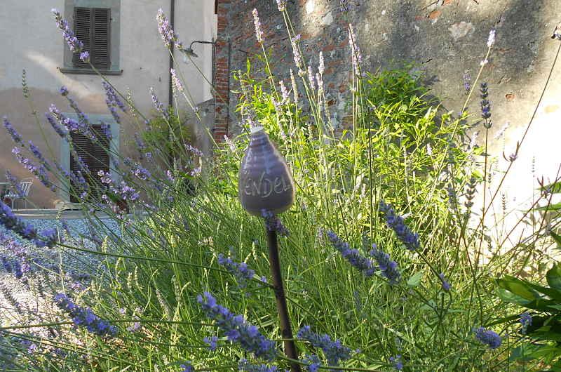 Gardening_season_spring_lavanda